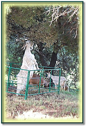 animaux-ferme-4.jpeg