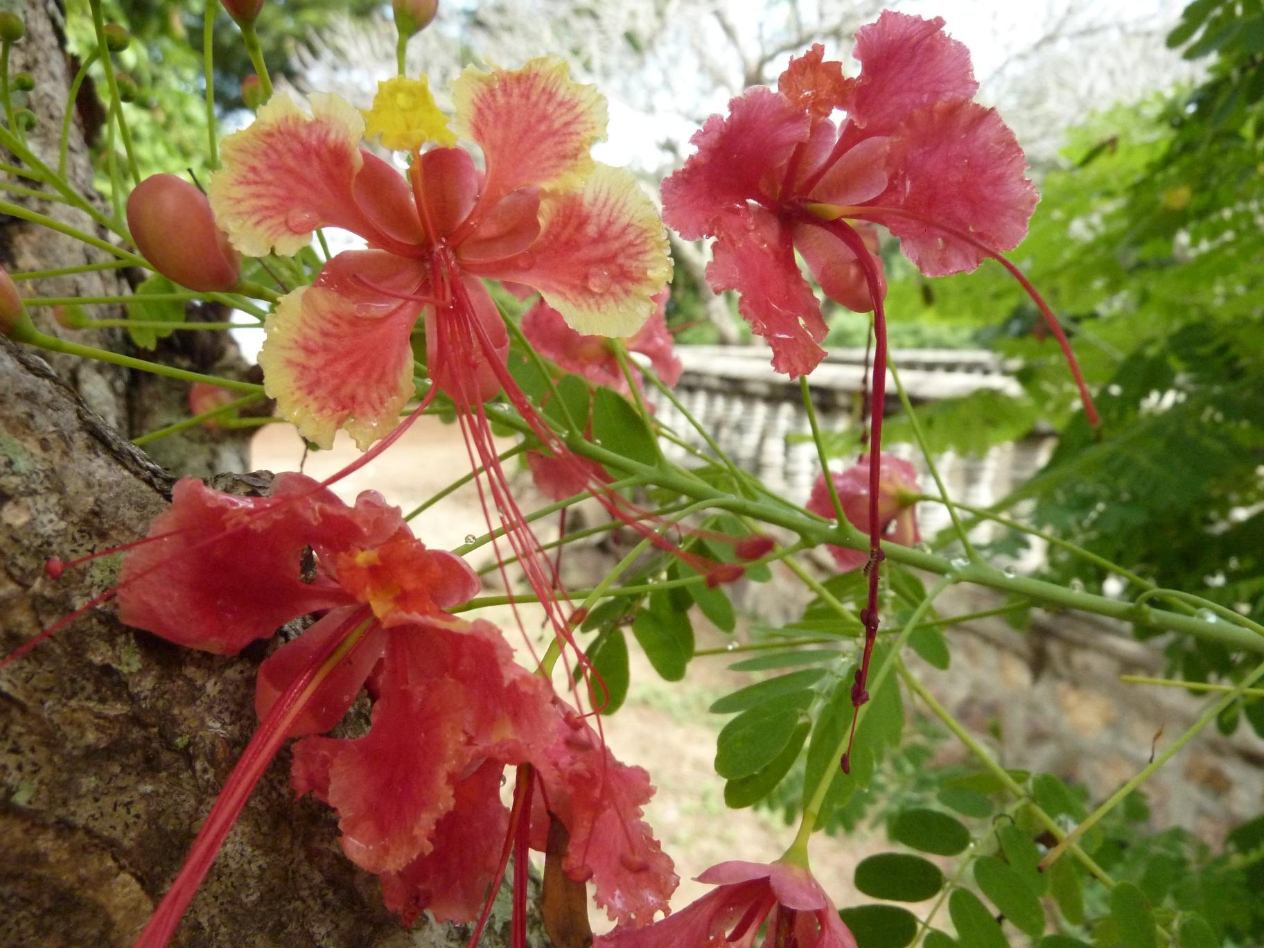 Fleurs et fruits du cambodge bluesy for Fleurs et plantes