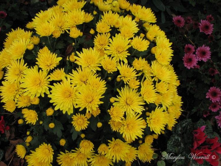 Images d'automne