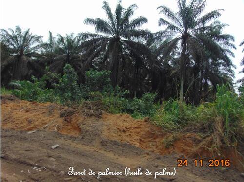 Notre Grande Aventure au CAMEROUN 5