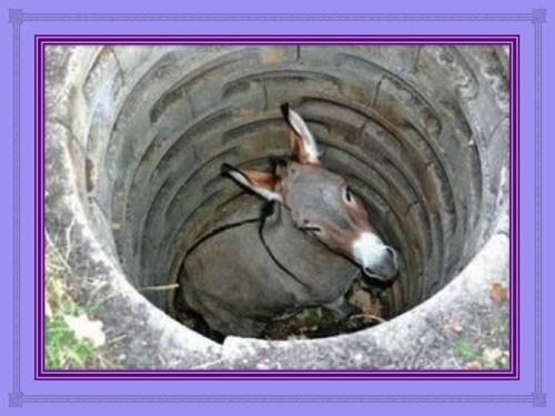 L'âne dans le puits et son maître