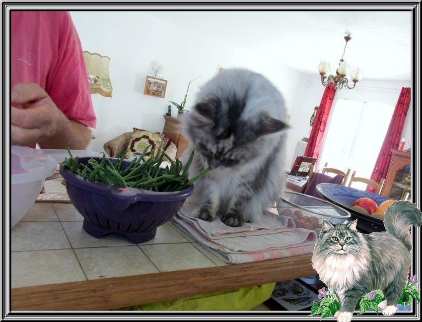 Aide de Miss Blue pour éplucher les haricots verts