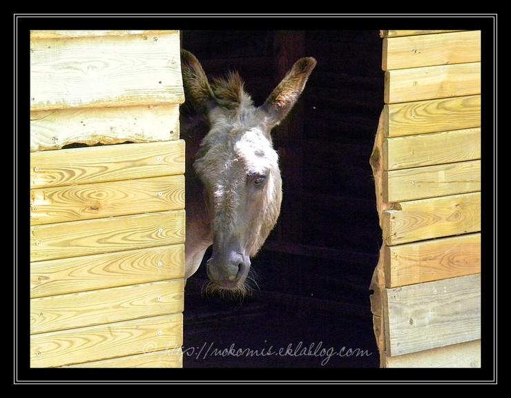 Histoire d'âne...