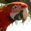oiseaux (26)