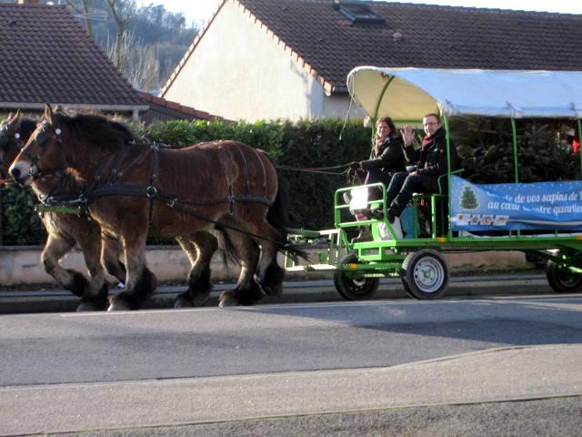 Des chevaux dans la ville
