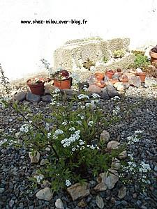 jardin mars 201015