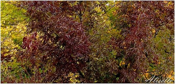 Couleurs-d-automne-octobre-2011-3.jpg