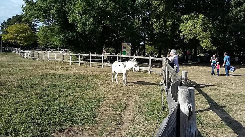 Le parc des bordes - les ânes