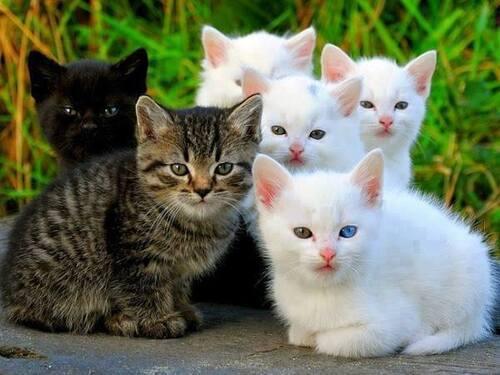 J'aime les chatons !