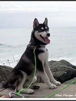 Maïko (6 mois)