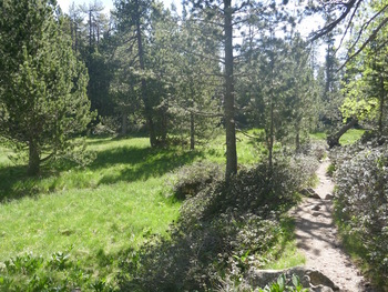 Un pla dans la forêt