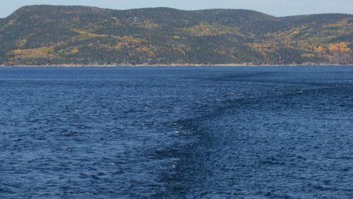 Tadoussac.Croisière sur le Saint Laurent à la Rencontre des Baleines