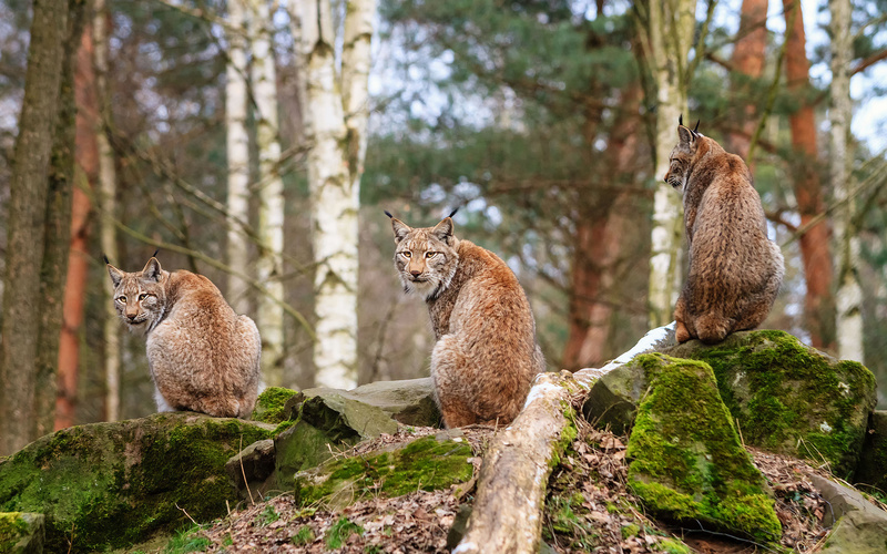 20 photos d'animaux - 4