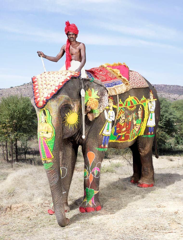 charles-freger-painted-elephants-16