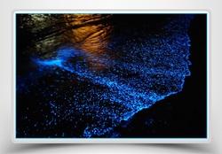 La Mer d'étoiles des Maldives