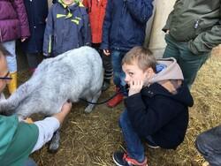 visite du vétérinaire