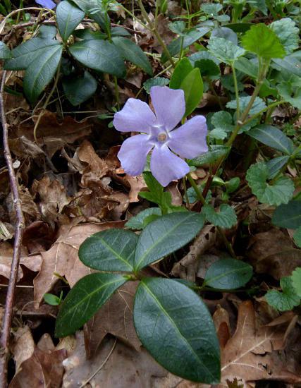 bleu03