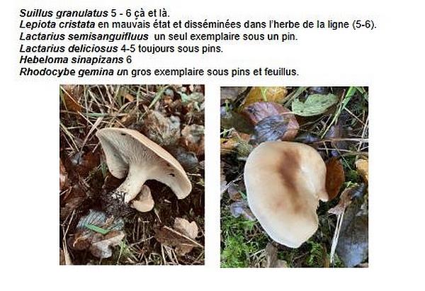 Une récolte mycologique singulière dans la forêt Châtillonnaise, par Marie-Geneviève et François Poillotte , avant le nouveau confinement !