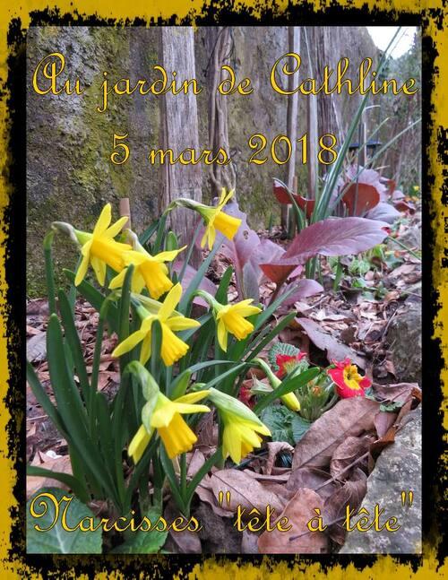 Balade au jardin et avec la lune du 11 au 20 mars