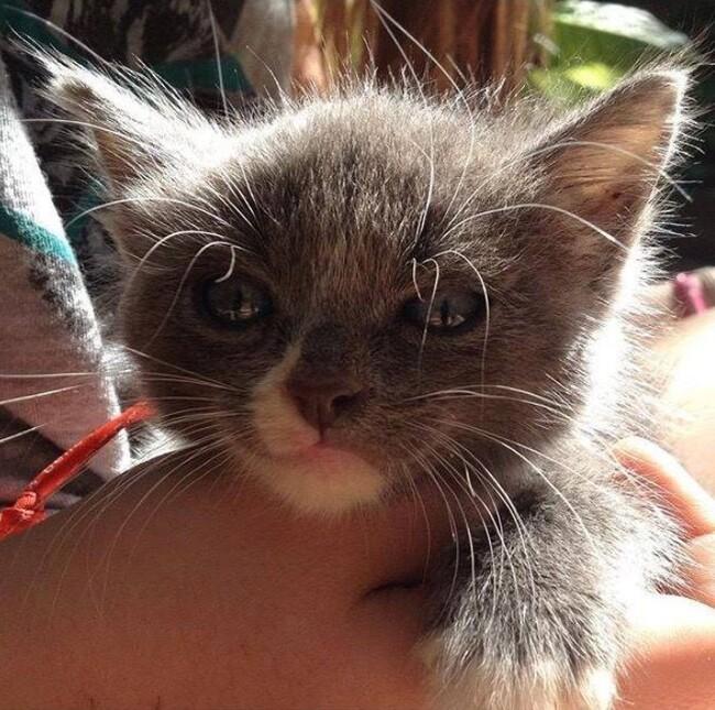 Suite du sauvetage des chats de Limoux