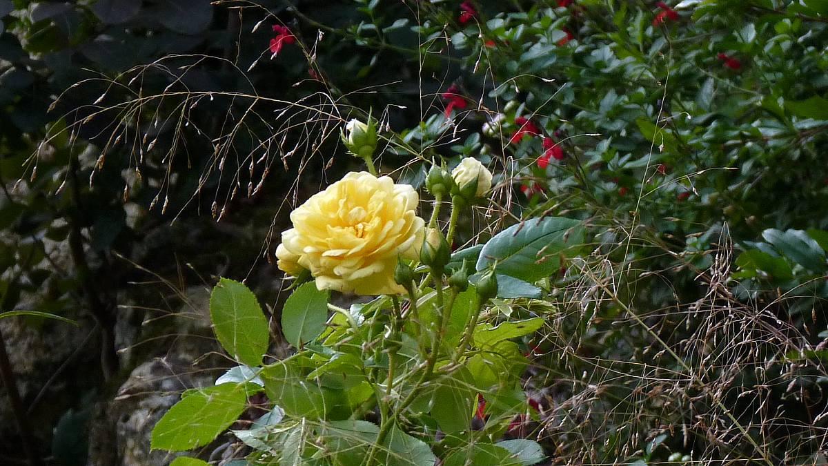 Au jardin de Marithé semaine 41/2013