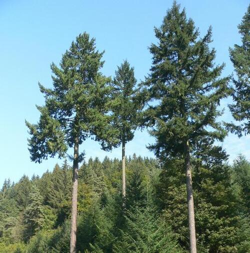 La forêt des géants