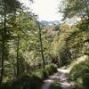 Retour sur la route forestière d'Espelunguère dans le bois d'Espélunguère