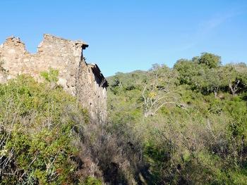 Les ruines vues vers l'amont