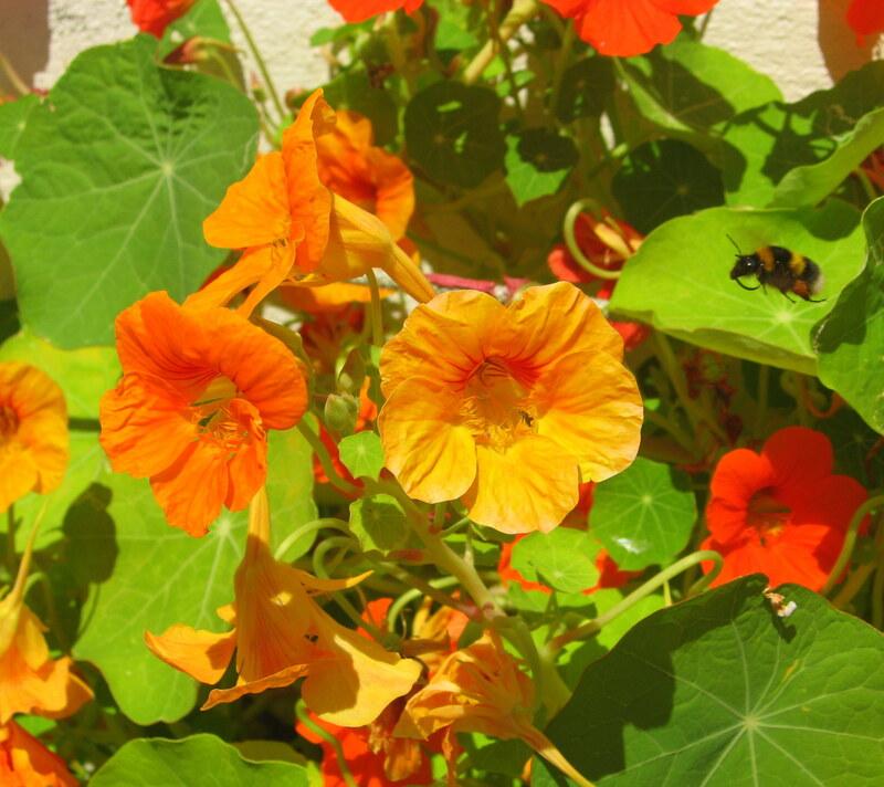 soleil en fleurs