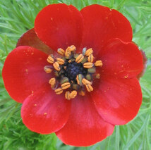 Fleurs roses - rouges