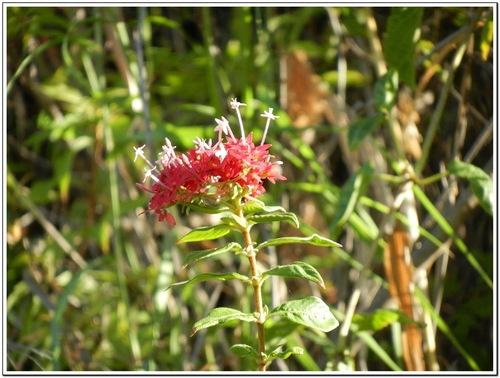 Les fleurs de Madagascar