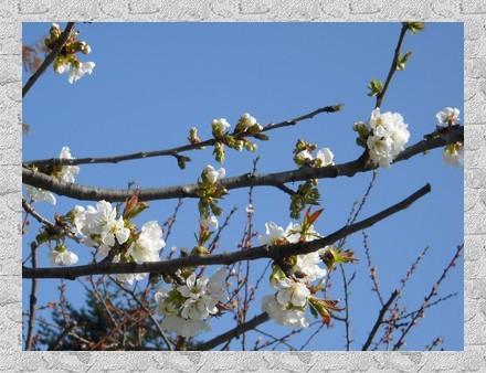 2012-03-28-004.jpg