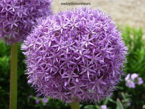 Méli-mélo fleuri...