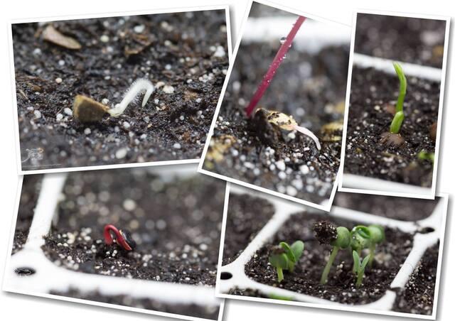 Seeds of Love : Portrait d' Anciens : Arnaud