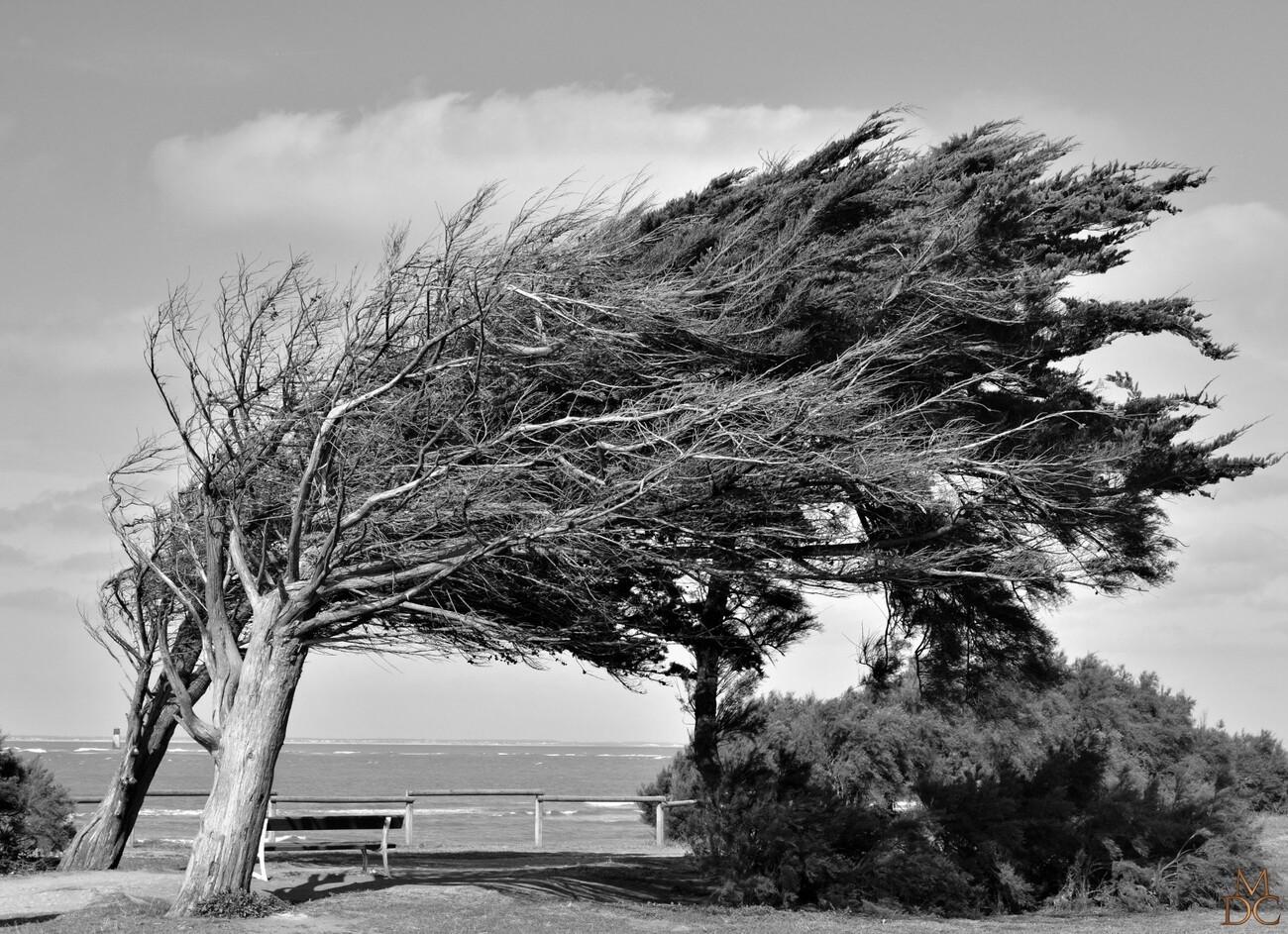 Battus par les vents....