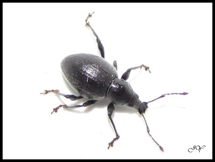 Nouveau coléoptères des dunes