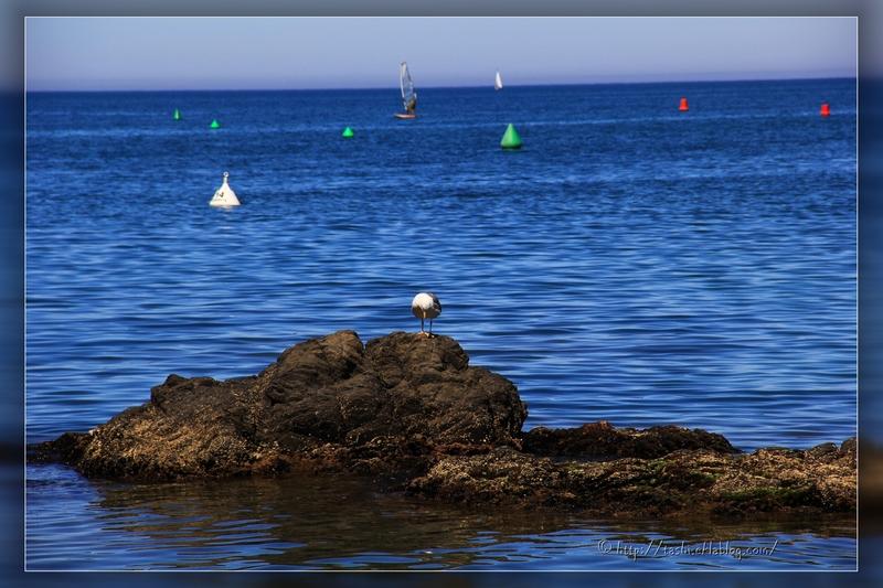 Collioure,sud