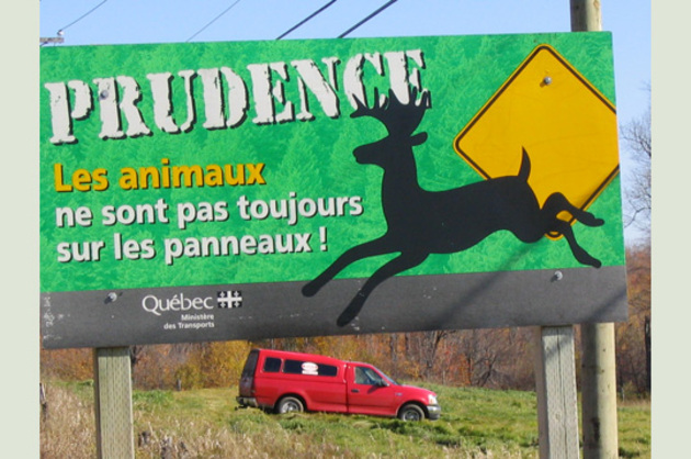 Prudence animaux