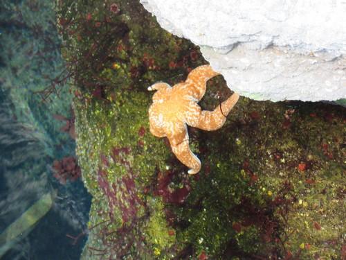 L'aquarium de Lisbonne 5