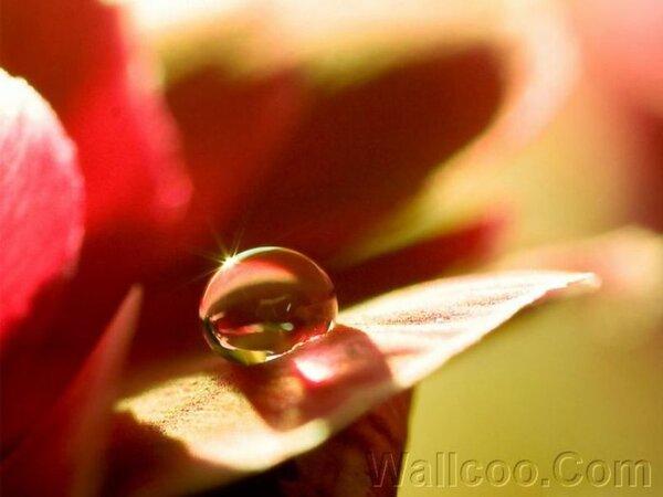 goutte d'eau sur une fleur Wallpaper