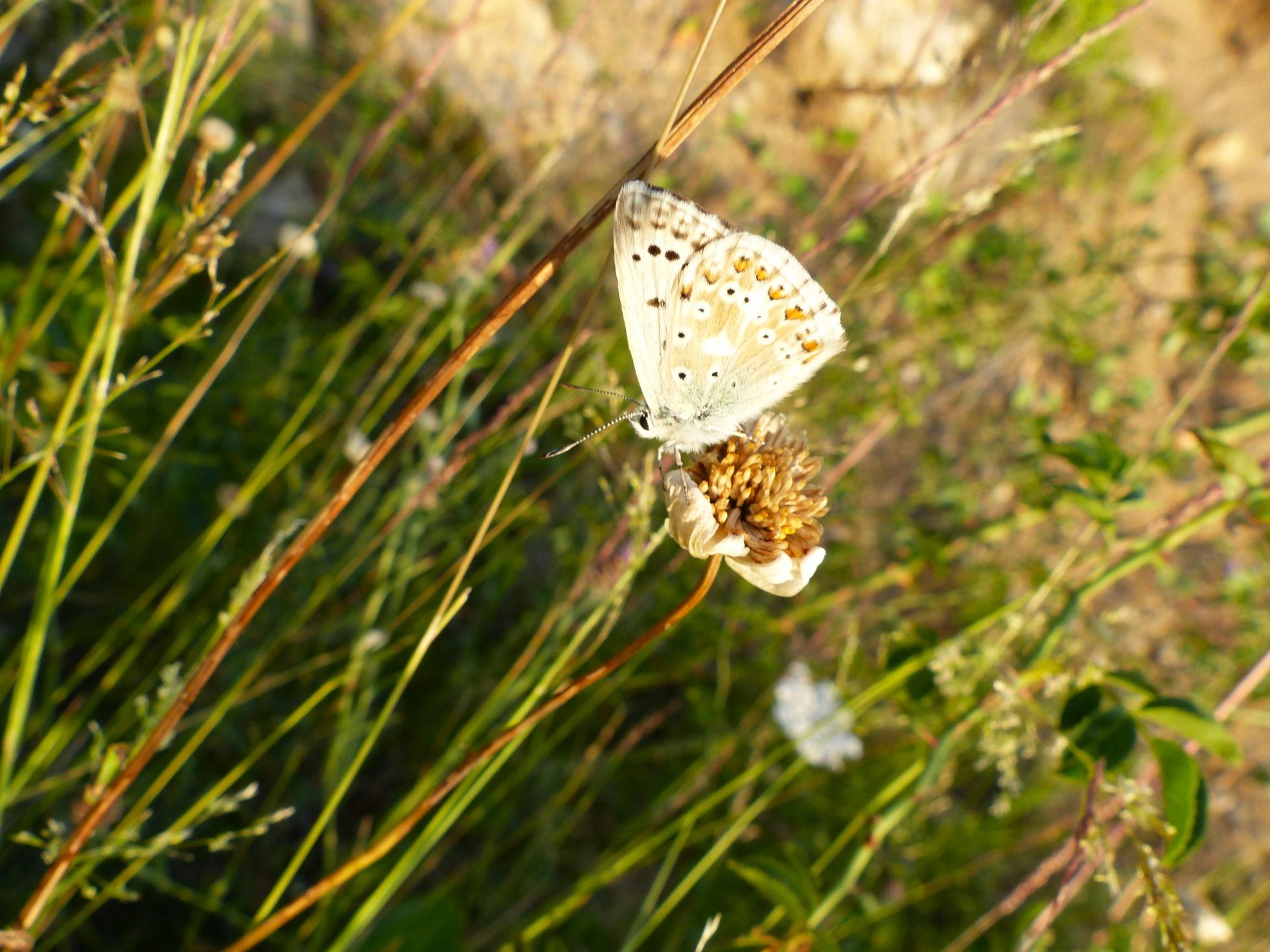 http://ekladata.com/BEwOzaZN8h-tmXU494lJmBJ0ejw/Le-Poil-30-07-2016-papillon.jpg