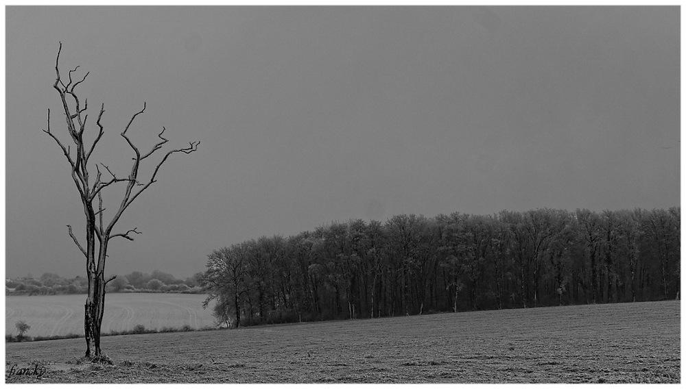 paysages d'hiver derrière chez moi