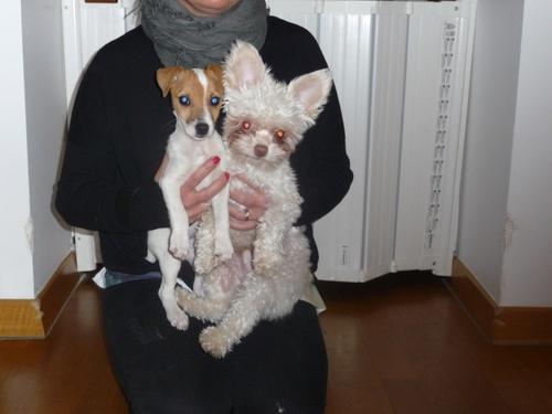 Iouki et Jaïa, deux petits coeurs en sauvetage pour ADL