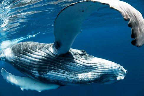 IMAGE : Un coucou de la baleine
