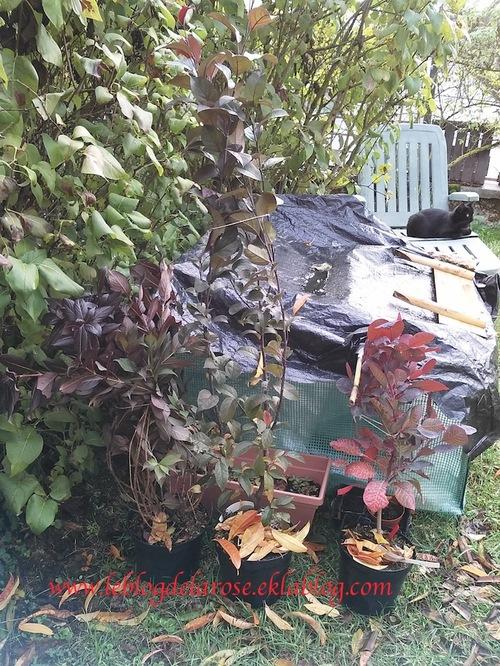 22 octobre 2016- Projet d'aménagement paysager /gardening landscape design project