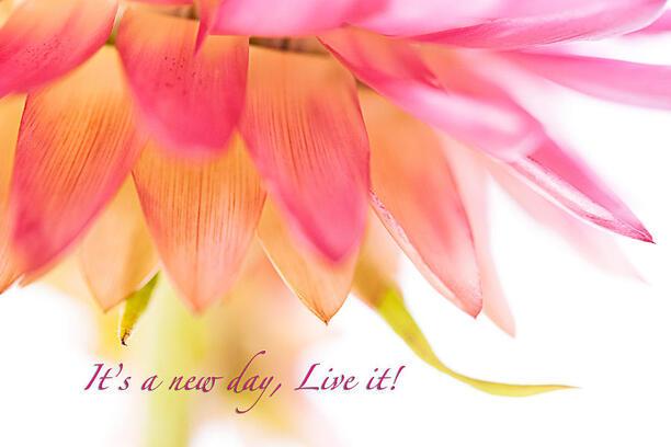 http://2.bp.blogspot.com/-X9fkHUlivtA/Tz4Q_7eAUpI/AAAAAAAABoU/VtjmHz5lQbI/s1600/its-a-new-day-live-it-debbie-dee.jpg