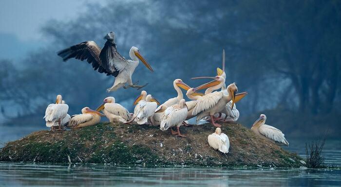 Pour Les Amateurs D'oiseaux..