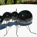 La plus grosse fourmie des Alpes. Clin d'oeil à l'auteur Raphaël