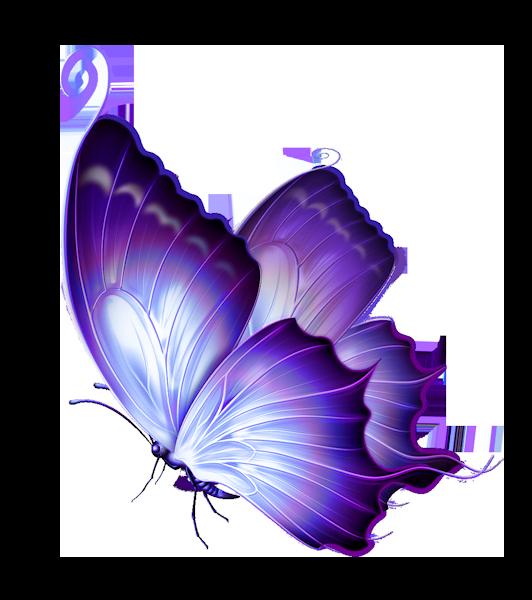Barmali Bagchi    les papillons