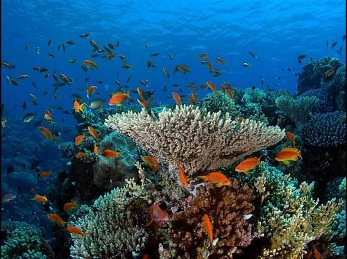 Les récifs coraliens